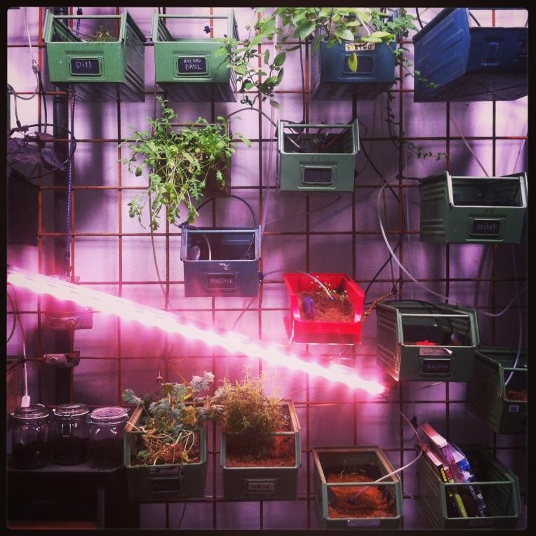 Eco-friendly urban farming at INFARM